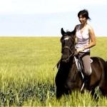 cavallo-umbria660